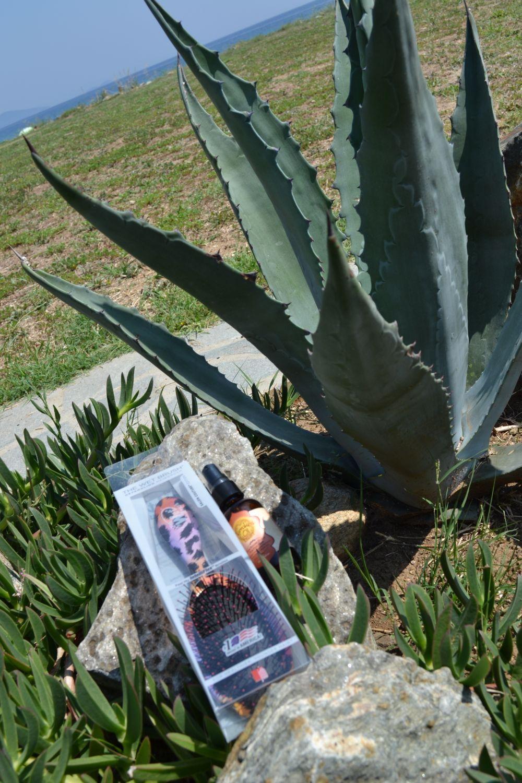 kaktus more